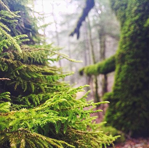 instagram forest1 34oerlef  LIBERTY INFINITY