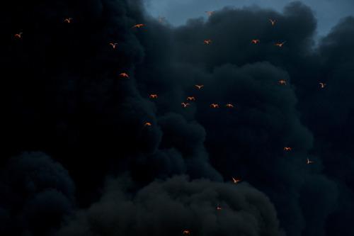 Vogels vliegen over de brand en worden verlicht door de vlammen.