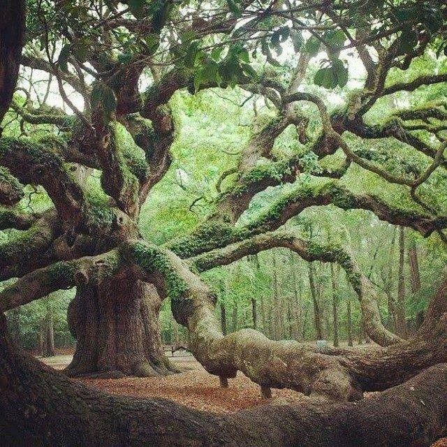 ancient tree beautiful nature