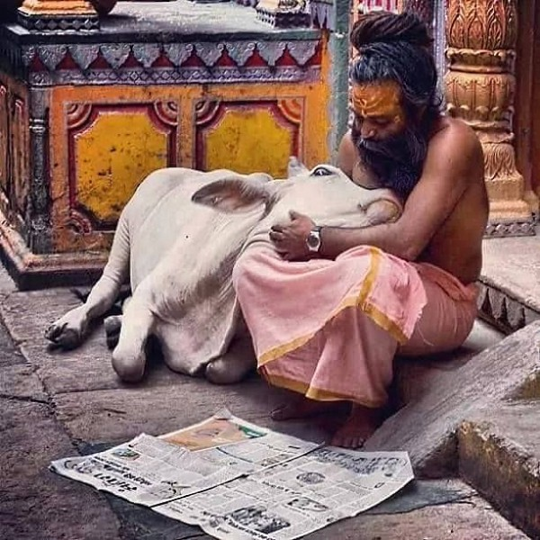 SADHU - HOLY MAN - HOLY COW - INDIA - VEGETARIAN - ANIMALS LOVE