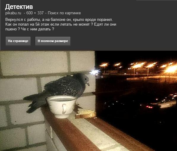 голубь на балконе забота о животных любовь к животным голуби россии russian grey pigeon love pigeons environmental protection lav lav lav @ @ !!!!  LIBERTY INFINITY