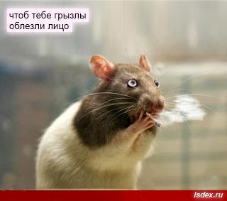 президент российской федерации - правительство российской федерации - владимир владимирович путин - смешно
