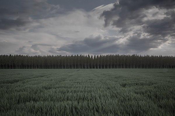 grey-field