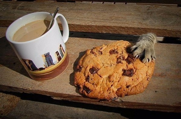 Cat and coffee with milk and cookie